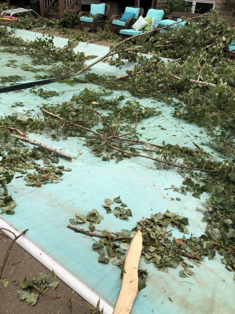 Tornado tree damage relief